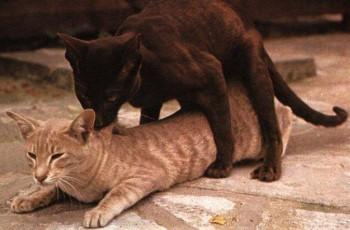 Если кот просит кошку можно ли кастрировать